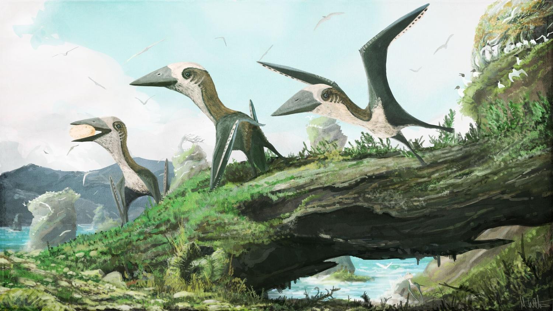 Учёные открыли новый вид миниатюрных крылатых динозавров