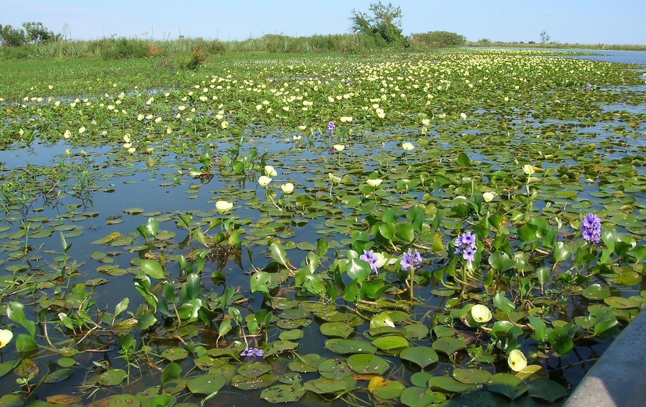в болотах Аргентины обнаружен круглый вращающийся остров