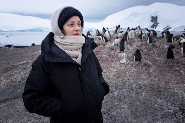 В гости к пингвинам: Марион Котийяр побывала в Антарктиде