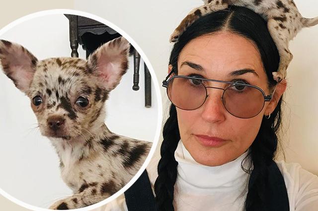 Что самоизоляция с людьми делает: Деми Мур сфотографировалась с собакой на голове